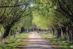 Road in Polish countryside. Country road among trees in Masovian Voivodeship of Poland royalty free stock images