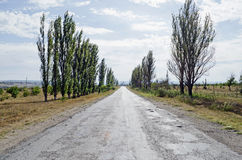 Road between poplars Stock Photography