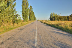 The road of poplars Royalty Free Stock Images