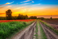 Road in poppies field at sunset Royalty Free Stock Image