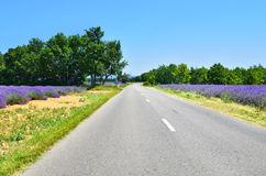 Road in Provence, France Stock Images
