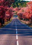 Road in Provence, France. Shot in a quiet morning Stock Photography