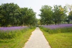 Road, purple flowers, Verbena bonariensis Royalty Free Stock Photo
