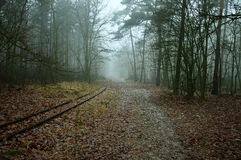 Road and railway tracks in the misty forest. Royalty Free Stock Photo