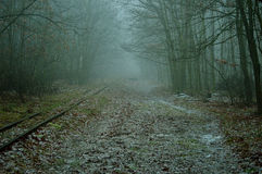 Road and railway tracks in the misty forest. Stock Photography