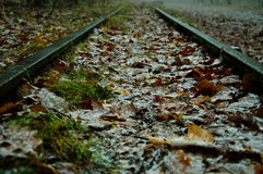 Road and railway tracks in the misty forest. Royalty Free Stock Photos