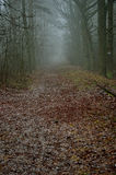 Road and railway tracks in the misty forest. Stock Photos
