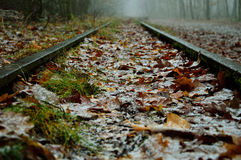 Road and railway tracks in the misty forest. Royalty Free Stock Photography