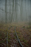 Road and railway tracks in the misty forest. Royalty Free Stock Images