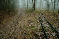 Road and railway tracks in the misty forest. Stock Photo