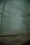 Road and railway tracks in the misty forest. Stock Image