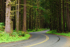 Road through rain forest royalty free stock photo