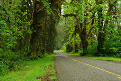 Road in rain forest. Driving in road of hoh rain forest in olympic national park, washington, usa Royalty Free Stock Image