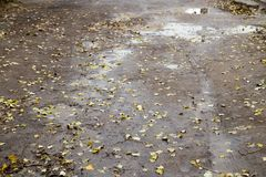 Road after rain. In the park in nature Royalty Free Stock Image