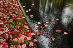 road after the rain with red leaves Stock Images