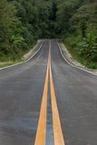 The road through the rainforest Royalty Free Stock Photography