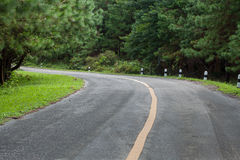 The road through the rainforest Stock Image