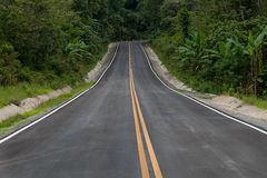 The road through the rainforest Royalty Free Stock Photo