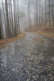 Road in a rainy forest Royalty Free Stock Photography