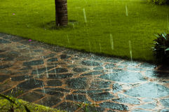 Road in rainy summer weather Royalty Free Stock Images