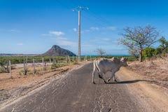 The road of Ramena Stock Photos