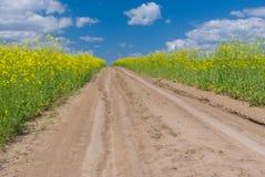 Road in rape field Stock Images