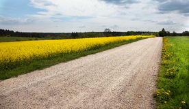 Road through a rape field. Royalty Free Stock Photography