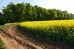 Road and rapeseed field Royalty Free Stock Photos