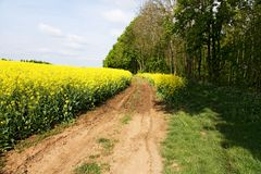 Road and rapeseed field Stock Images