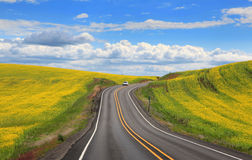 Road through Rapeseed fields Royalty Free Stock Photography