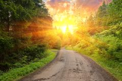 Road in a rays of sun