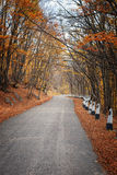 Road in a red autumn forest Royalty Free Stock Photo
