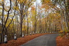 Road in a red autumn forest Royalty Free Stock Photos