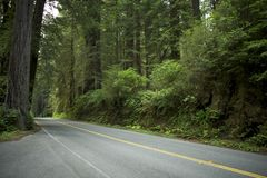 Road in Redwood Forest Royalty Free Stock Photography