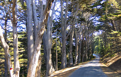 Road through redwood forest Stock Photography