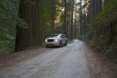 Road Redwood National Park Royalty Free Stock Photo