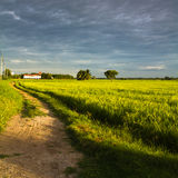 Road in rice field Royalty Free Stock Photography