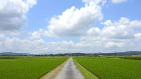 Road and rice field stock video footage