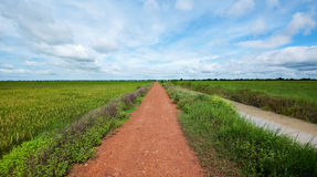 Road and rice fields in Cambodia Stock Photo