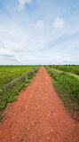 Road and rice fields in Cambodia Stock Image