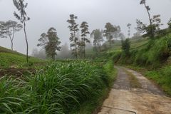 The road and rice fields in mountains fog and clouds royalty free stock photos