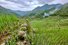Road in rice paddy terrace fields  Philippines Royalty Free Stock Image