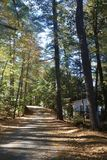 Road rising through woods on a sunny day in Maine lazy relax vacation remote. Sun-dappled dirt road running through forest of very tall trees, cabin, fall leaves royalty free stock photography