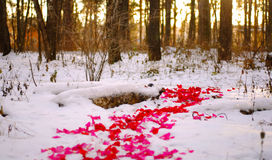 Road of rose petals Royalty Free Stock Photography