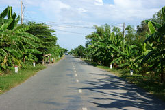 Road with row of banana trees Stock Images