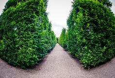 Road through row of green bushes Royalty Free Stock Photography
