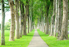 Road through row of trees Stock Photos