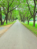 Road through row of trees Stock Photography