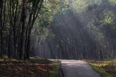 A Road in Rubber Plantation Royalty Free Stock Photos