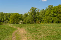 Road running along the edge of spring green forest Stock Image